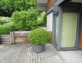 terrasse_veyrier_1775